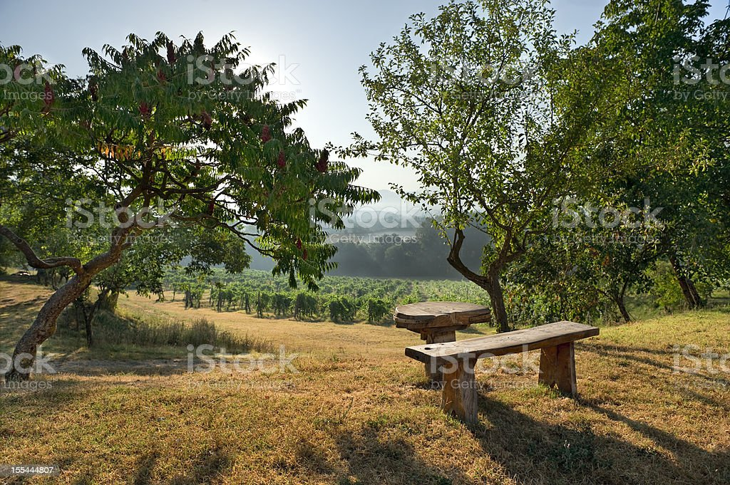 The Vineyard.Color Image royalty-free stock photo