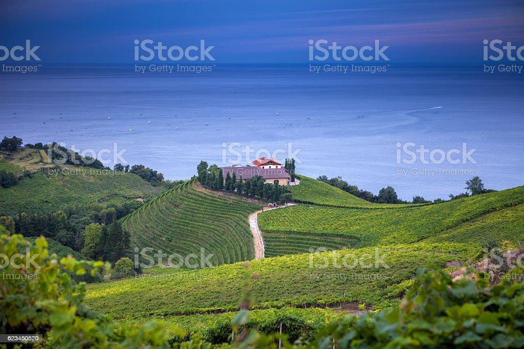 The vineyards of  Getaria stock photo
