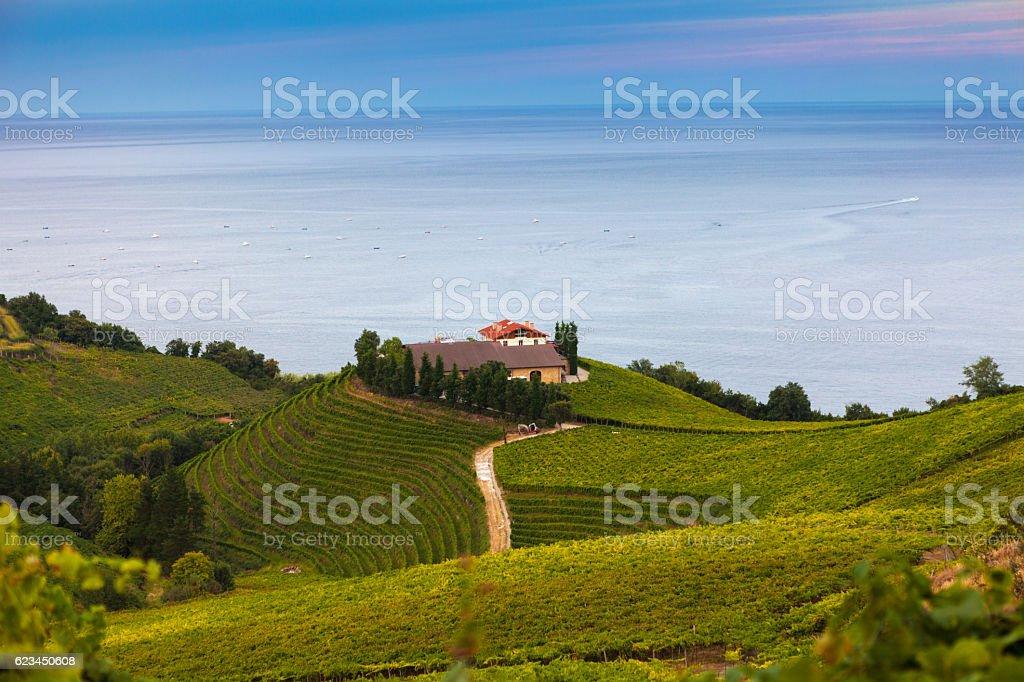 The vineyards of  Getaria – Foto