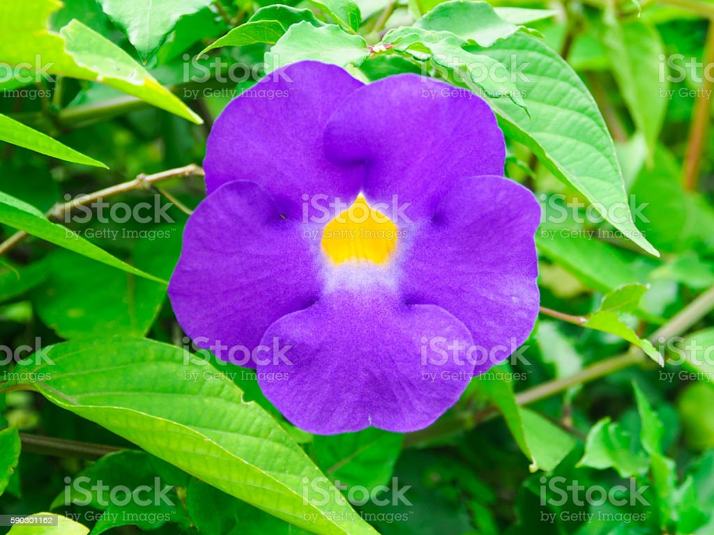 The Violet Flower. royaltyfri bildbanksbilder