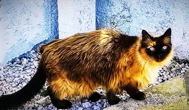 The visiting super cat picture id1279629709?b=1&k=6&m=1279629709&s=612x612&w=0&h=hdi3g6ck8sk86lzzousi0diyqjwl rkg3 n4rdcgt5w=