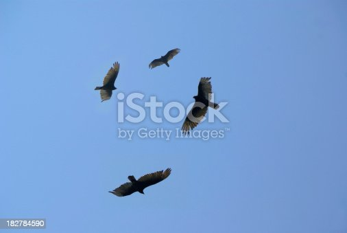 Circling Buzzards are a sign of death or near death as they sight potential carrion to feast on. Click on banner below for similar images: