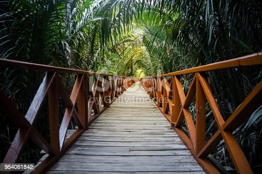 The walkway is made from a wooden bridge has handrails used walked into the tropical rain forest. perspective view of the wooden bridge among the tropical bushes