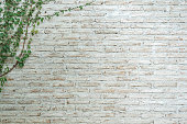 The wall is made of brick and then painted in white. There are creepers on the left wall. This wall is popular in English style. Also known as a vintage style. as background with copy space.