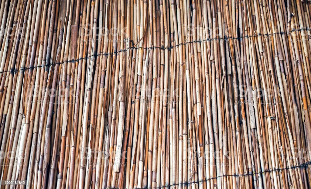 The wall of the reed stalks stock photo