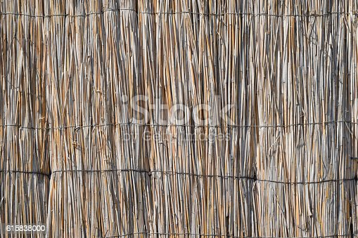 istock The wall of the reed stalks 615838000