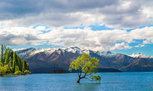 The Wanaka lake with the famous Wanaka tree The Wanaka lake with the famous Wanaka tree verliefd stock pictures, royalty-free photos & images