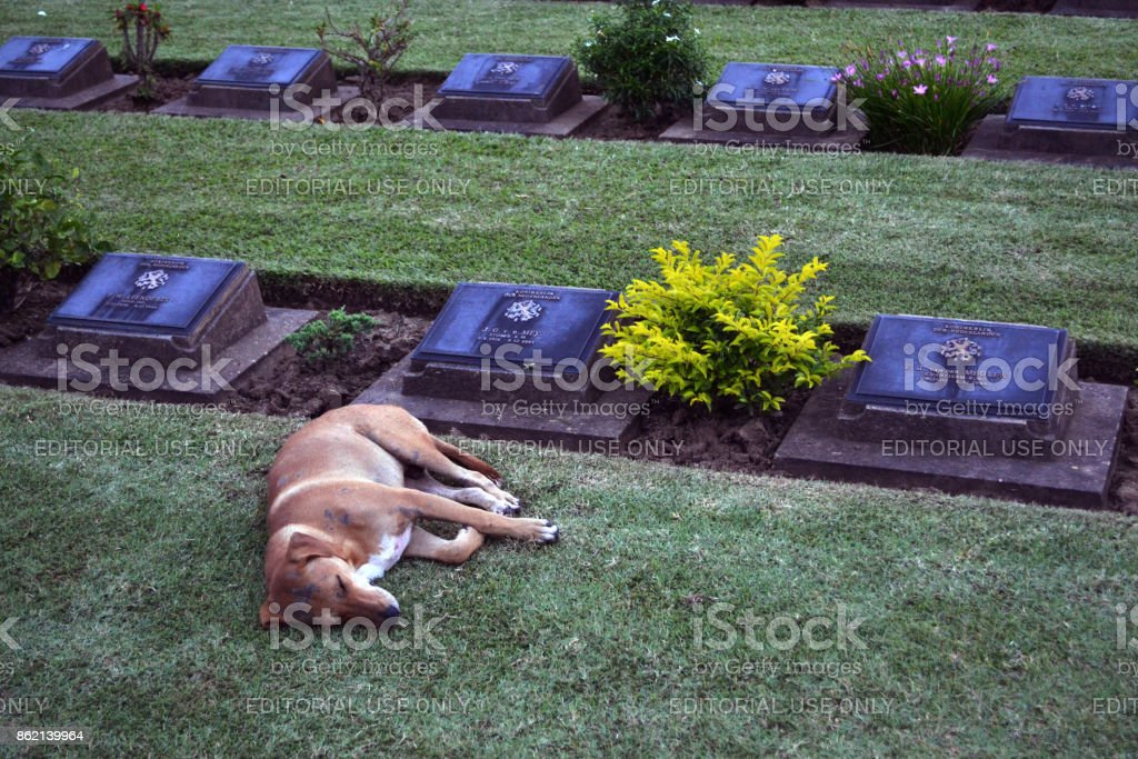 The war cemetery in Kanchanaburi, Thailand stock photo