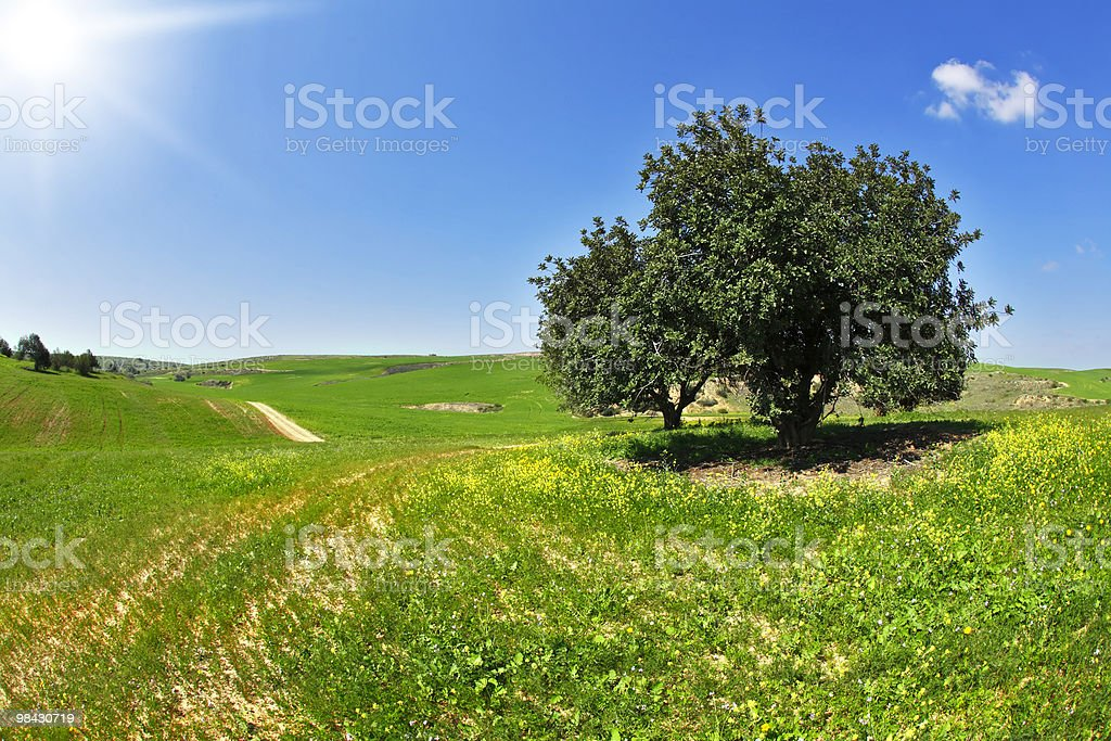 The warm spring day in fields royalty-free stock photo