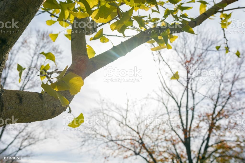 The warm sun shines through a tree stock photo