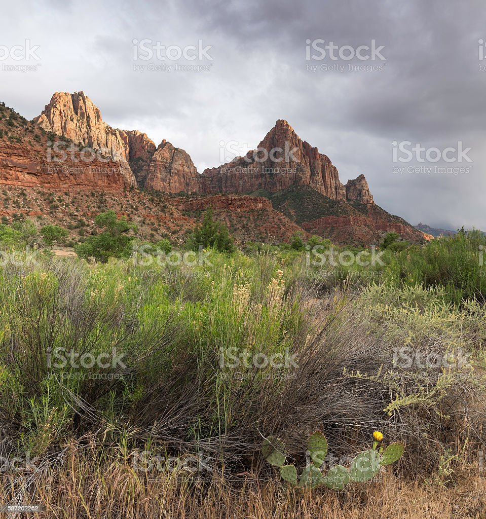 The Watchman at Zion National Park stock photo