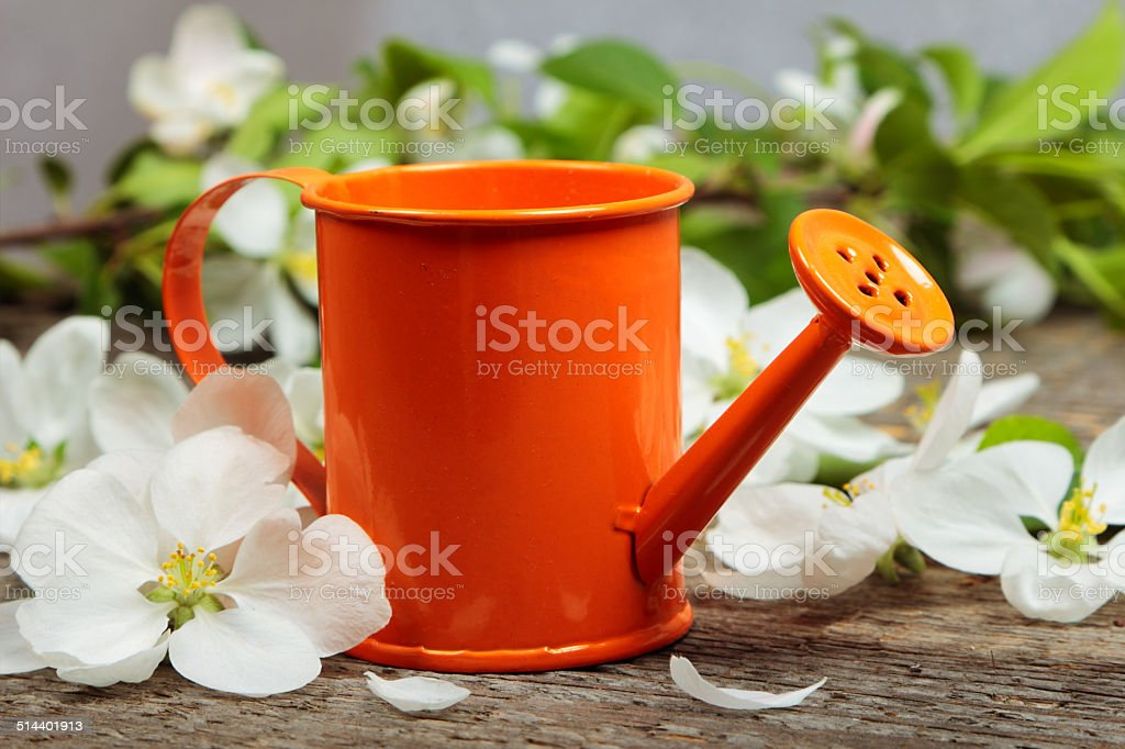 The watering can stock photo
