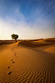 footprints out of the rippled sand dunes of the sultanate of oman.
