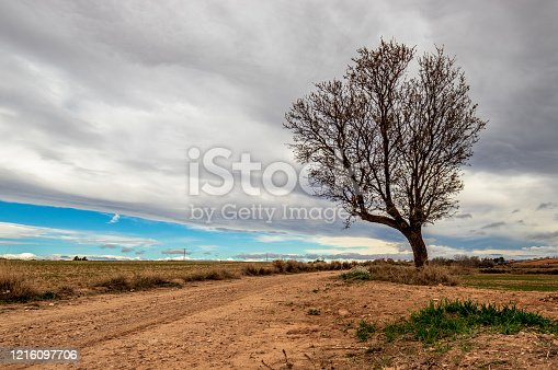 825525754 istock photo the way with the tree cloud & blue skys 1216097706