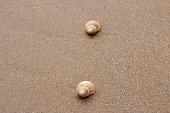 istock The whelk shells 1263171182