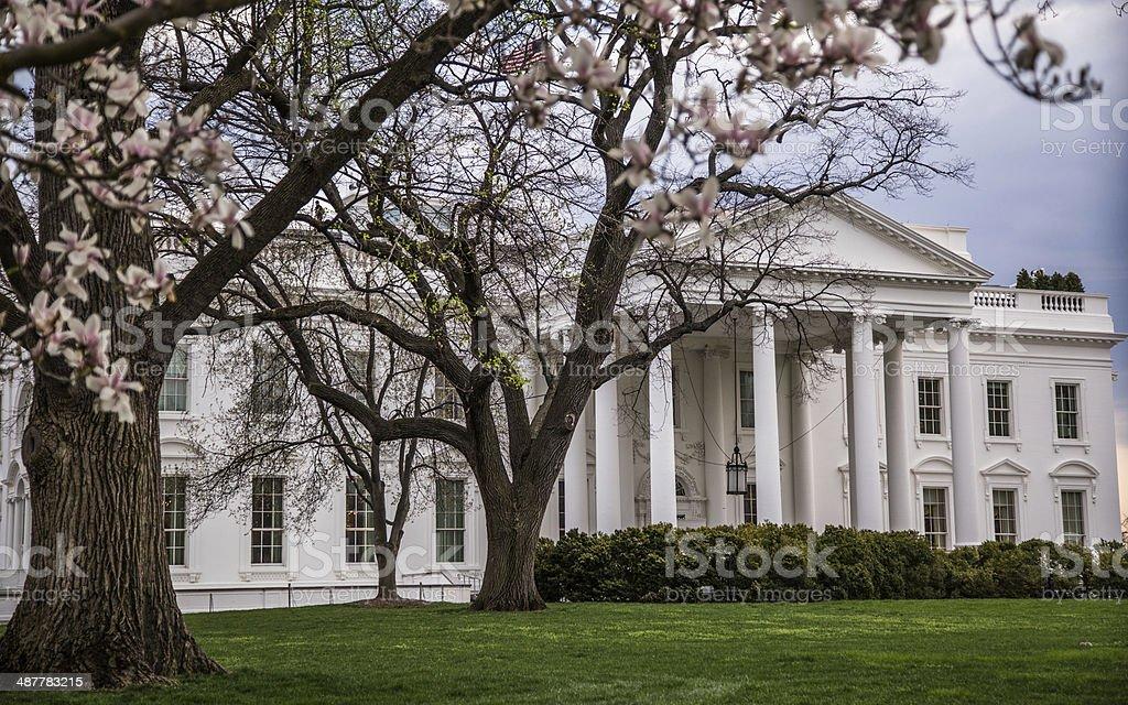 The White House Through Magnolias stock photo