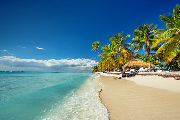 the white sands and palm trees of a tropical beach - caribbean stock pictures, royalty-free photos & images