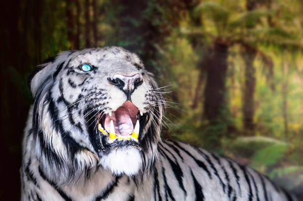 the white tiger growls. big canines - dally stock pictures, royalty-free photos & images