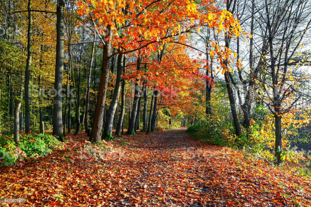 The wide trail covered with fallen leaves, on the sides of which grow trees with still green and already yellow leaves that brightens autumn sun stock photo