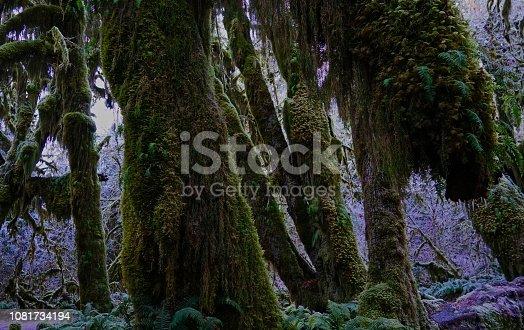 Northwest Washington's Olympic Peninsula. Olympic National Park/West.