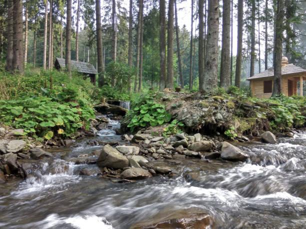 산에 야생 강. 우크라이나어 카르파티아인. 우크라이나어 산맥 - 카르파티아 산맥 뉴스 사진 이미지