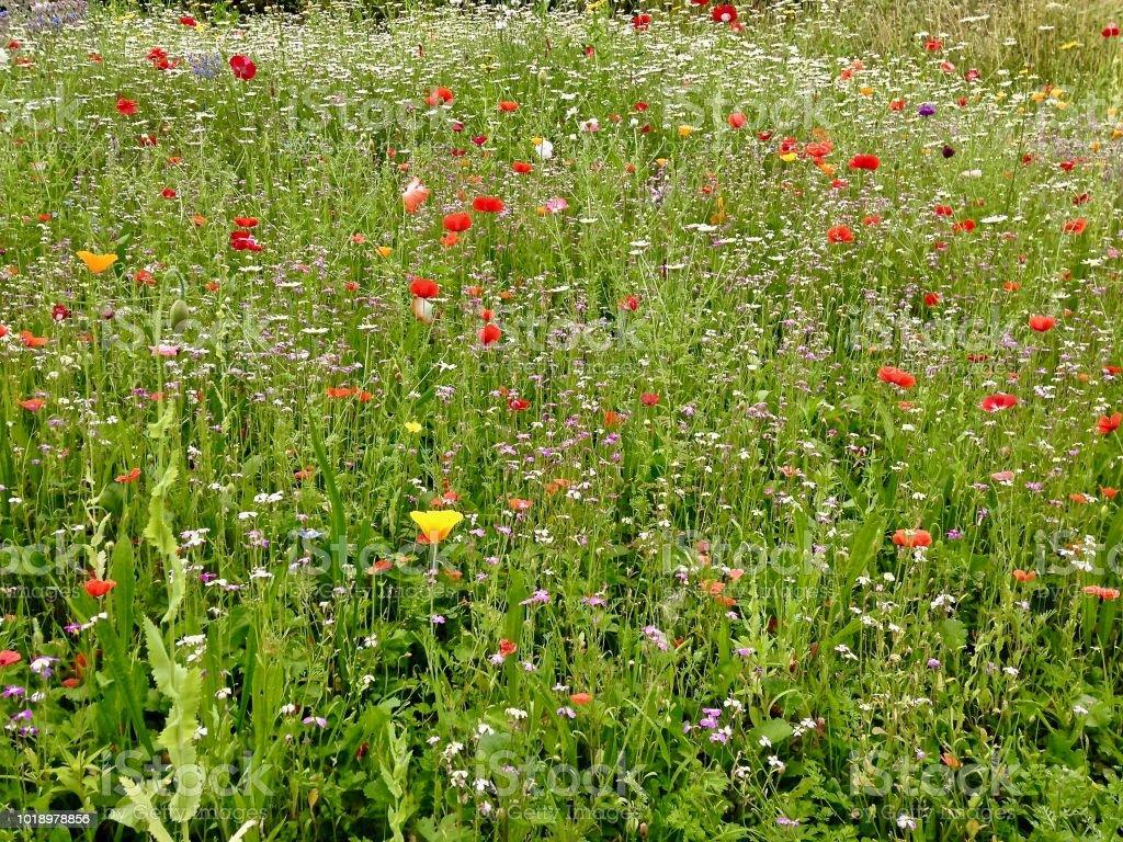 The Wildflower Meadow stock photo