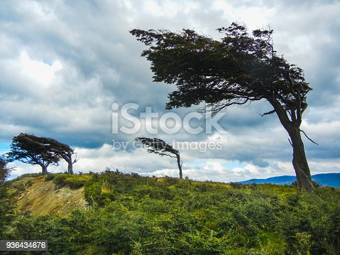istock The wind shaped trees in ushuaia in tierra del fuego 936434676