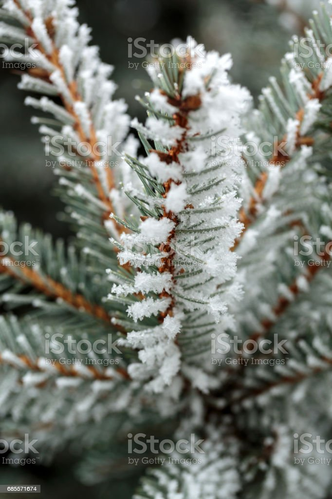 the winter impression into the frosty day royalty-free 스톡 사진