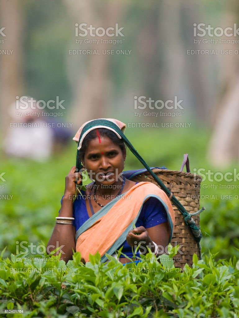 The woman and the nearby village collect tea on a tea plantation in the morning. stock photo