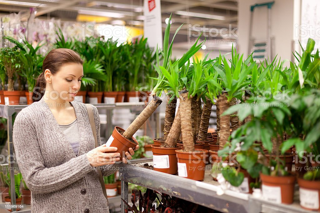 The woman buys a flower in shop royalty-free stock photo