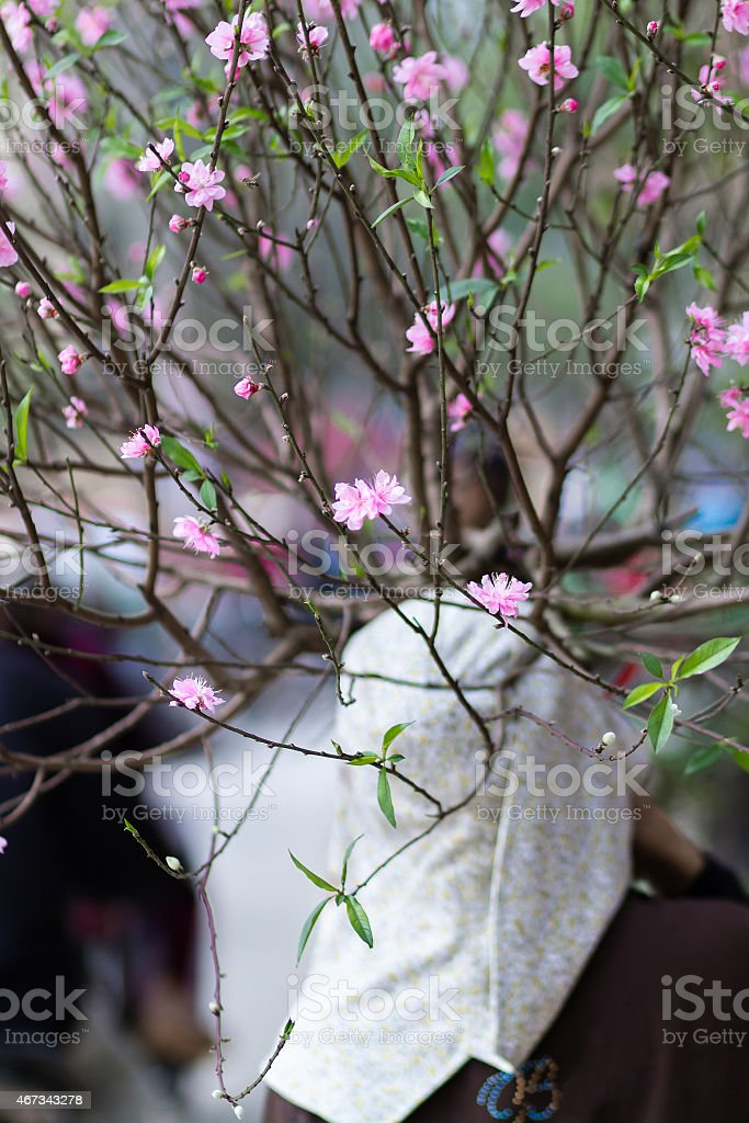 The woman did not identify a flower seller in Hanoi royalty-free stock photo