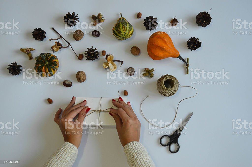 The woman is preparing a present for the holidays, she ties the bow. The picture is displayed from the top on the white background and with pumpkin, chestnut, pine cone, hazelnut as a decoration. stock photo