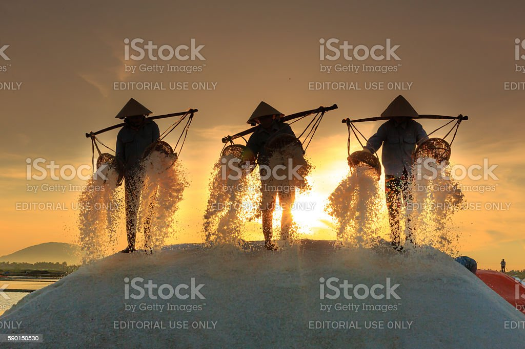 the women are working on salt field at dawn stock photo