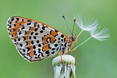 beautiful portrait of butterfly isolated