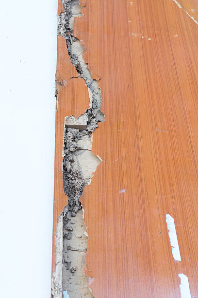 The wood door with termites damage The wood door with termites damage isoptera stock pictures, royalty-free photos & images