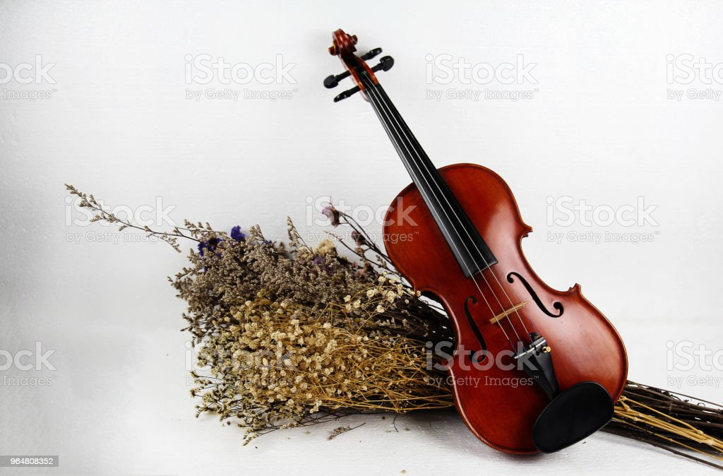 The wooden violin put beside group of dried flower,on white background,show body of violin,in vintage and art style,warm light tone. royalty-free stock photo