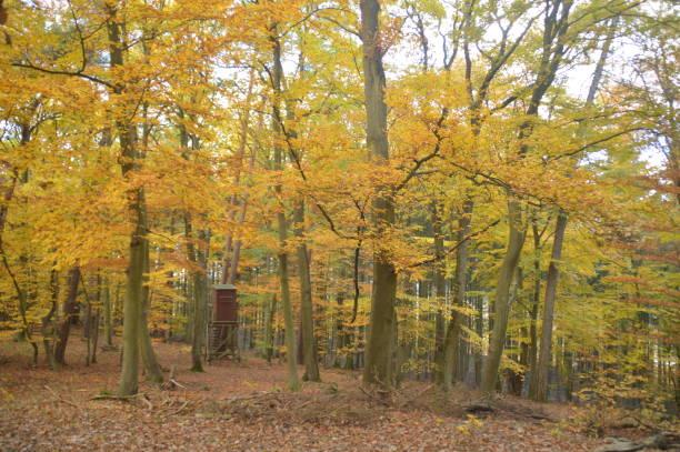 skogen under hösten - bernkastel kues höst bildbanksfoton och bilder