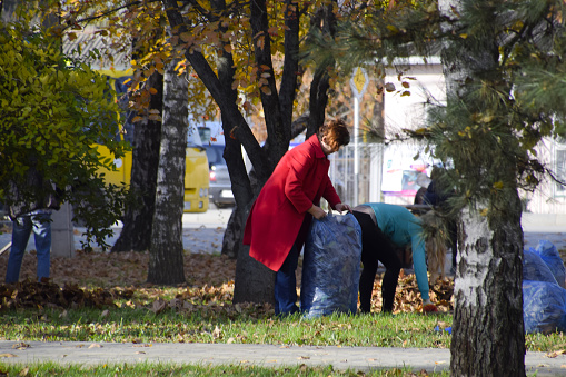 The workers of the municipality collect leaves