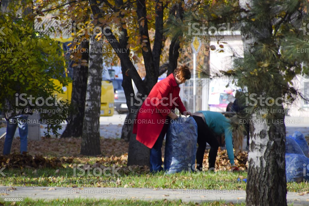 The workers of the municipality collect leaves stock photo