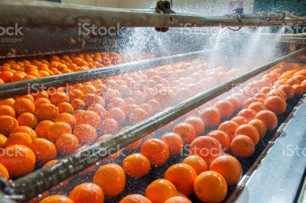 Le travail d'agrumes - Photo