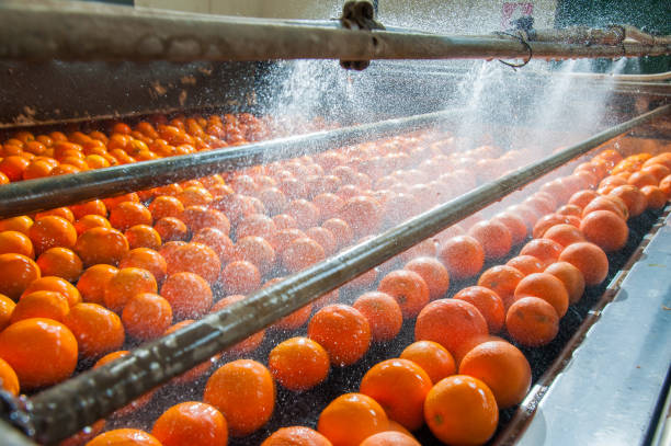 bearbetning av citrusfrukter - livsmedelstillverkningsfabrik bildbanksfoton och bilder