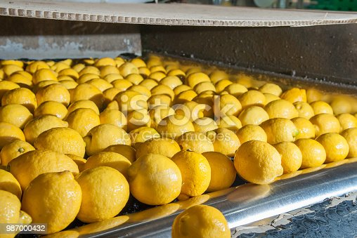 Femminello lemons after the washing process in the carriage for the selection and calibration phase