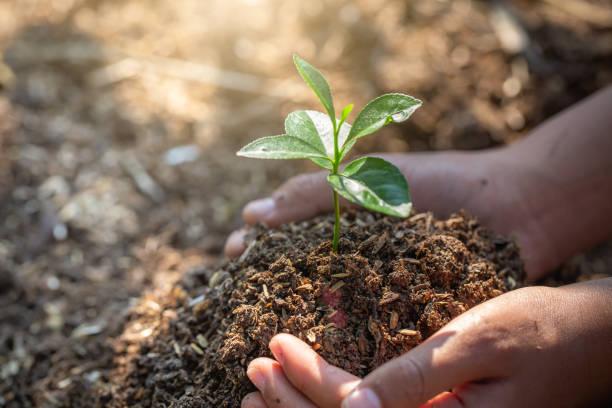 världs miljö dagen, träd som växer på jorden i mänskliga händer, forest bevarande koncept. - biologisk mångfald bildbanksfoton och bilder