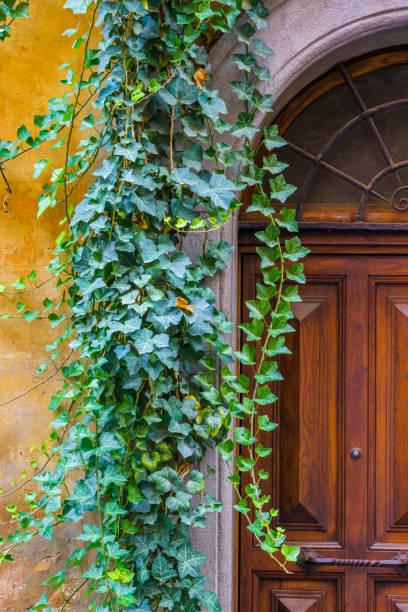 the world heritage city of rome in italy - ivy building imagens e fotografias de stock