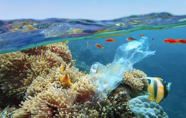 the world ocean pollution. beautiful tropical coral reef with sea anemones, clownfish and colorful coral fish - polluted with plastic bag. the sea surface view. - barriera corallina foto e immagini stock