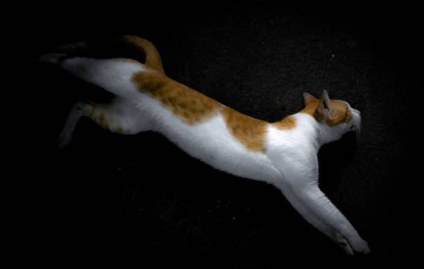 The yellow and white cat jump out of the shadow darkness picture id1181466323?b=1&k=6&m=1181466323&s=612x612&w=0&h=f43ix 2oprwe5uf5lplk3 jqk3fowvbl1tf5snzx964=