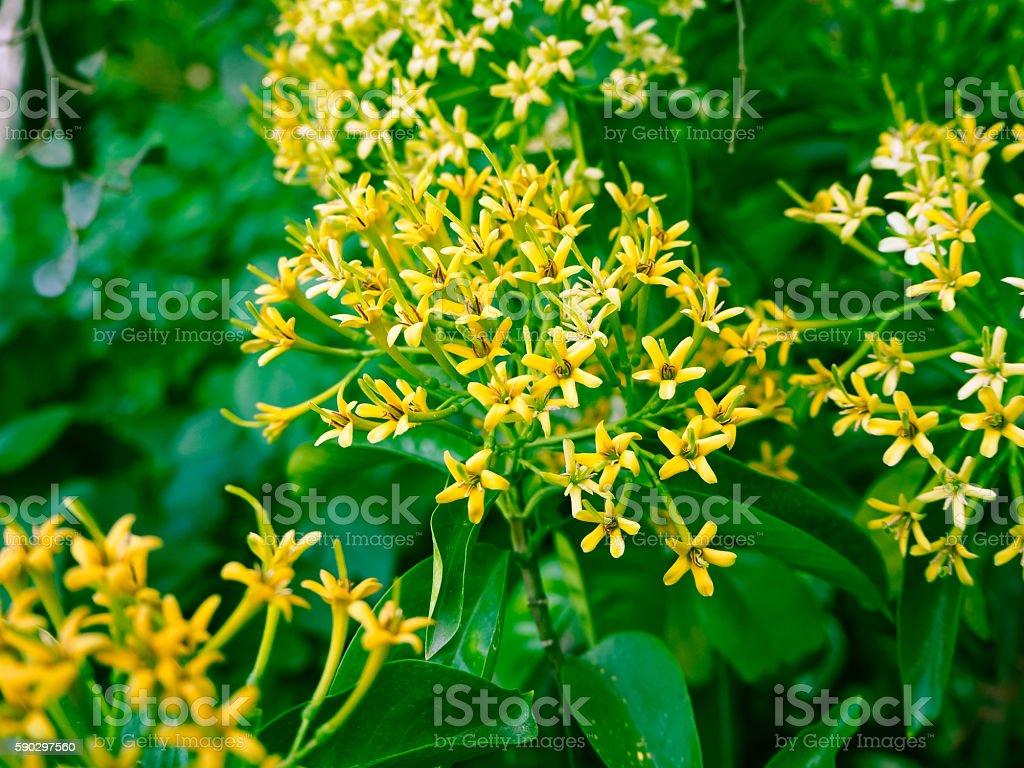 The Yellow Flower. royaltyfri bildbanksbilder
