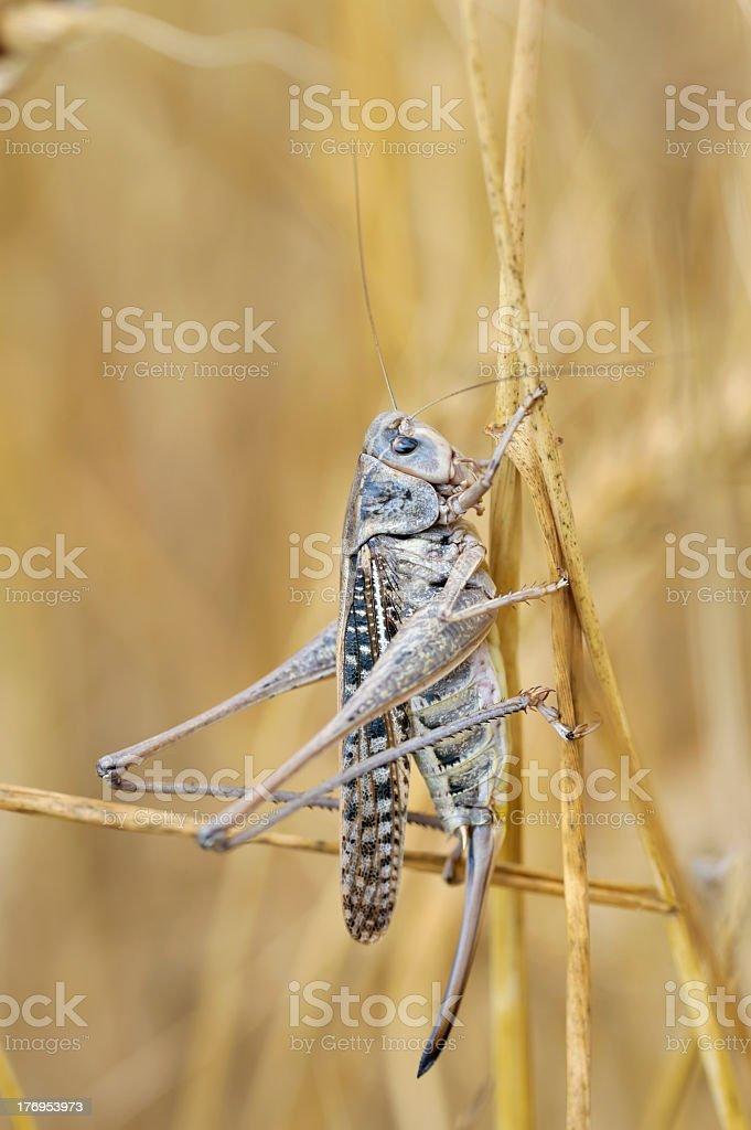 The yellow grasshopper stock photo
