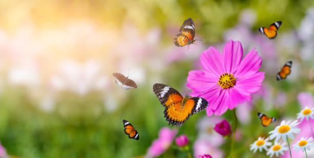 The yellow orange butterfly is on the white pink flowers in the green picture id1184033434?b=1&k=6&m=1184033434&s=612x612&w=0&h=x9gqoe8lf3om3vntg9fiw8wpc2js5twti1 tbyc5ll0=