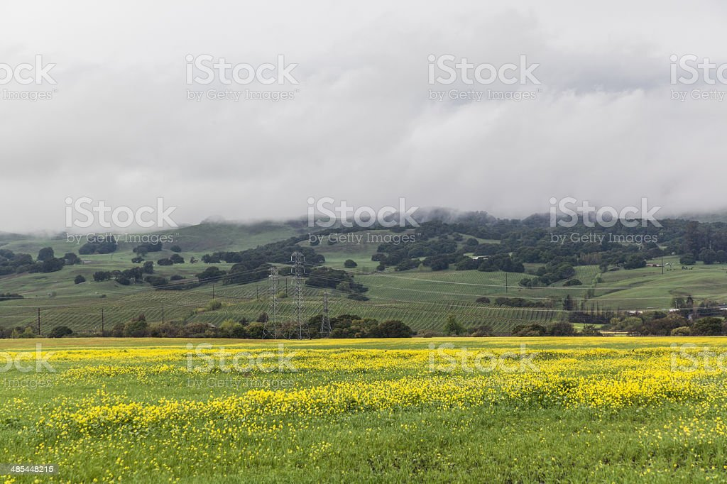 The Yellow Valley II stock photo